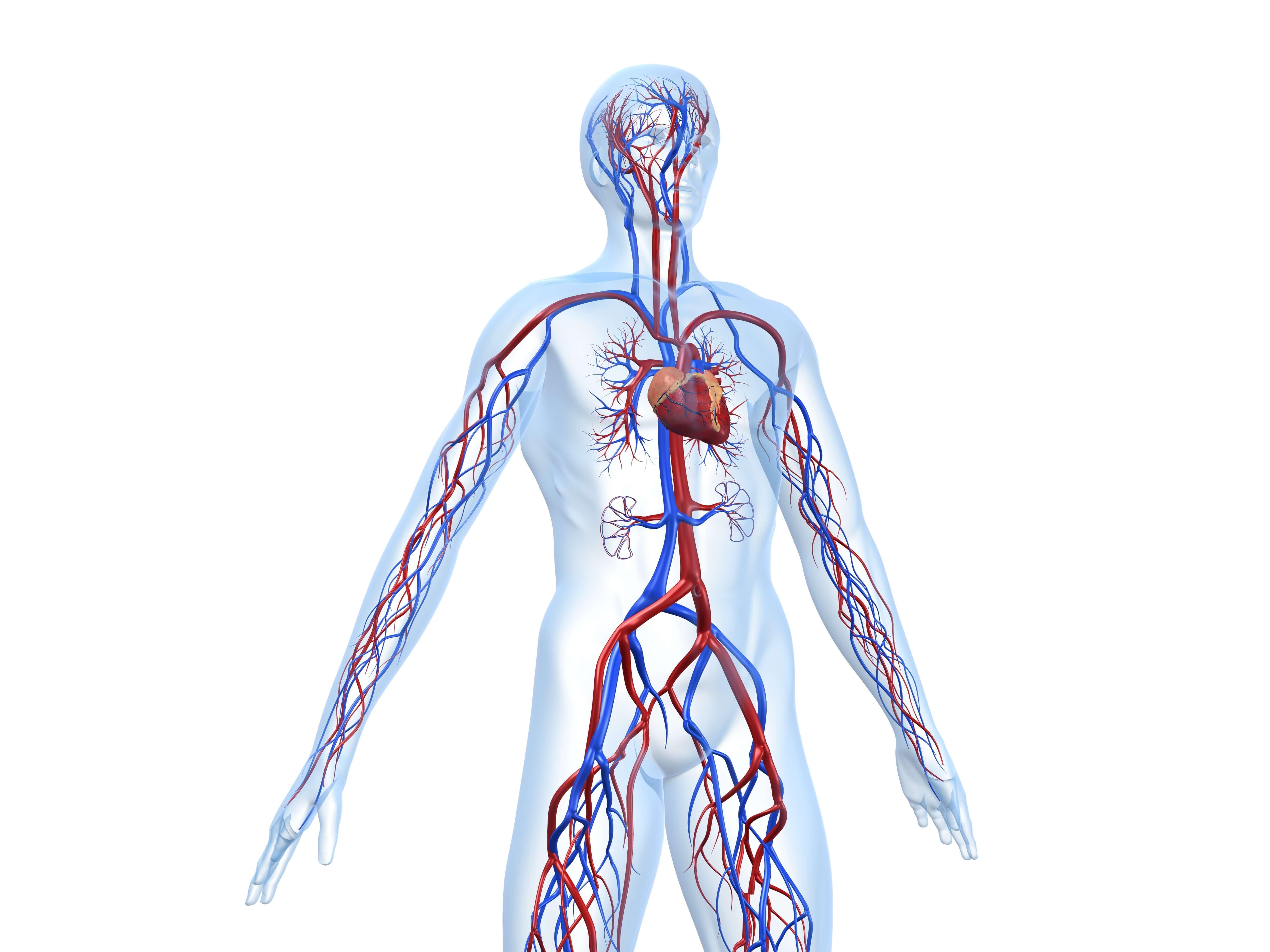 Arterial Exam | Peripheral Arterial Disease | NAVIX Vascular Lab